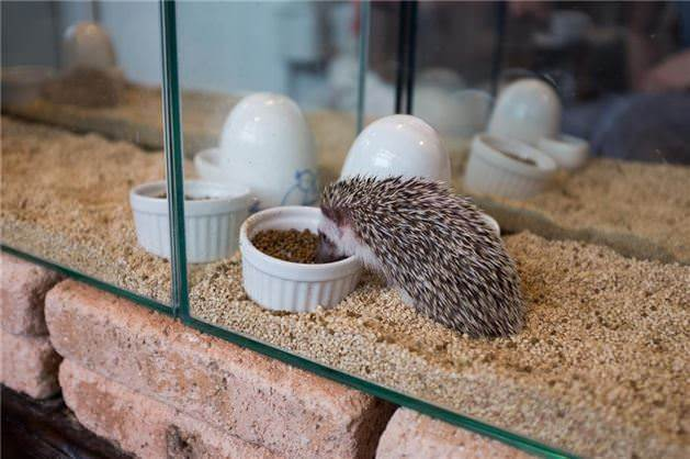 Cage and Toys for African Pygmy Hedgehogs